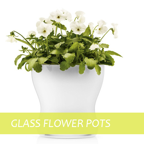 Glass Flower Pots